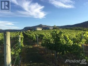 osoyoos-commercial-real-estate-vineyard